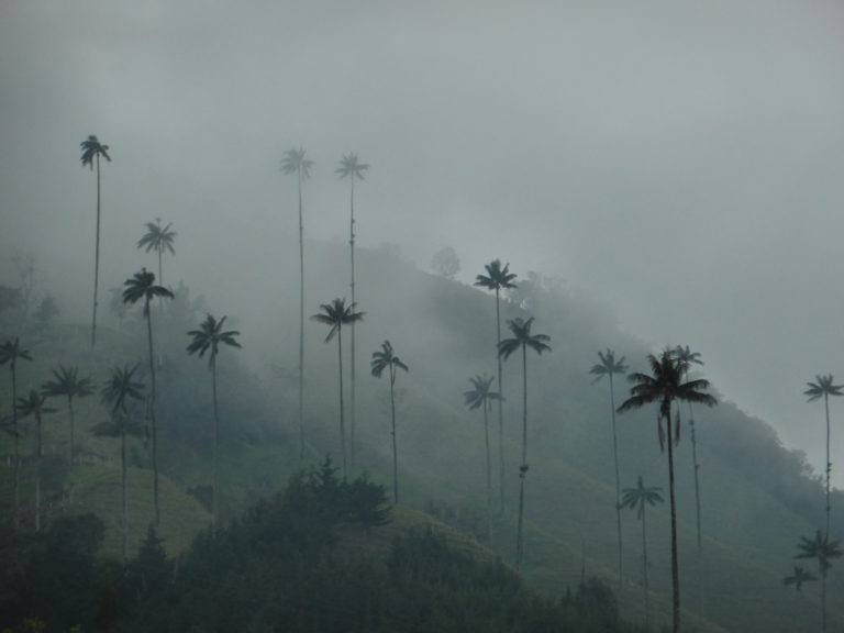 Valle Cocora next to Salento