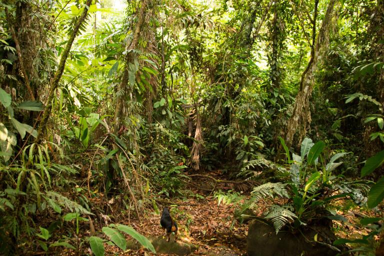 Longo Mai, Costa Rica