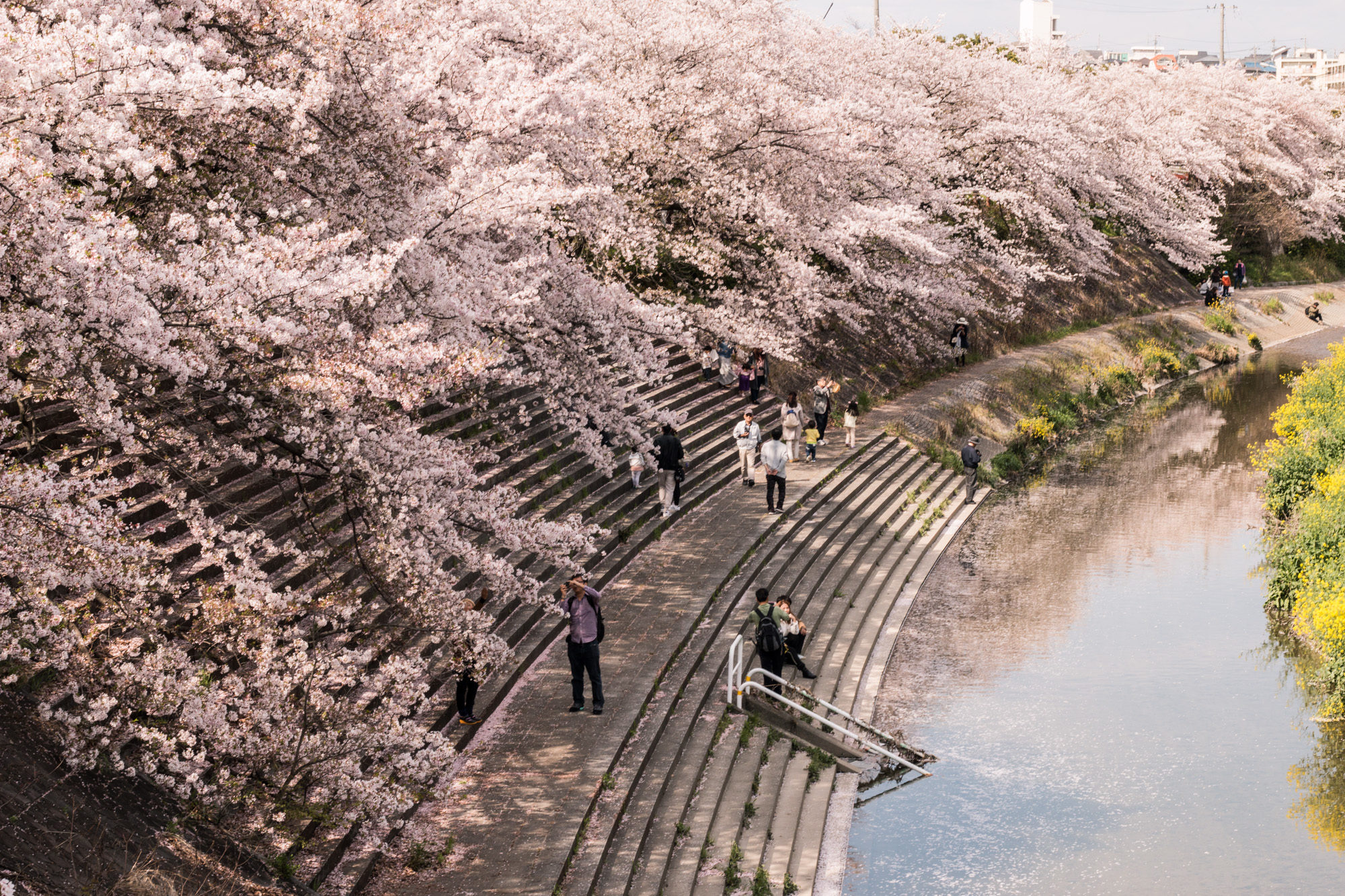 Image result for yamazaki river sakura