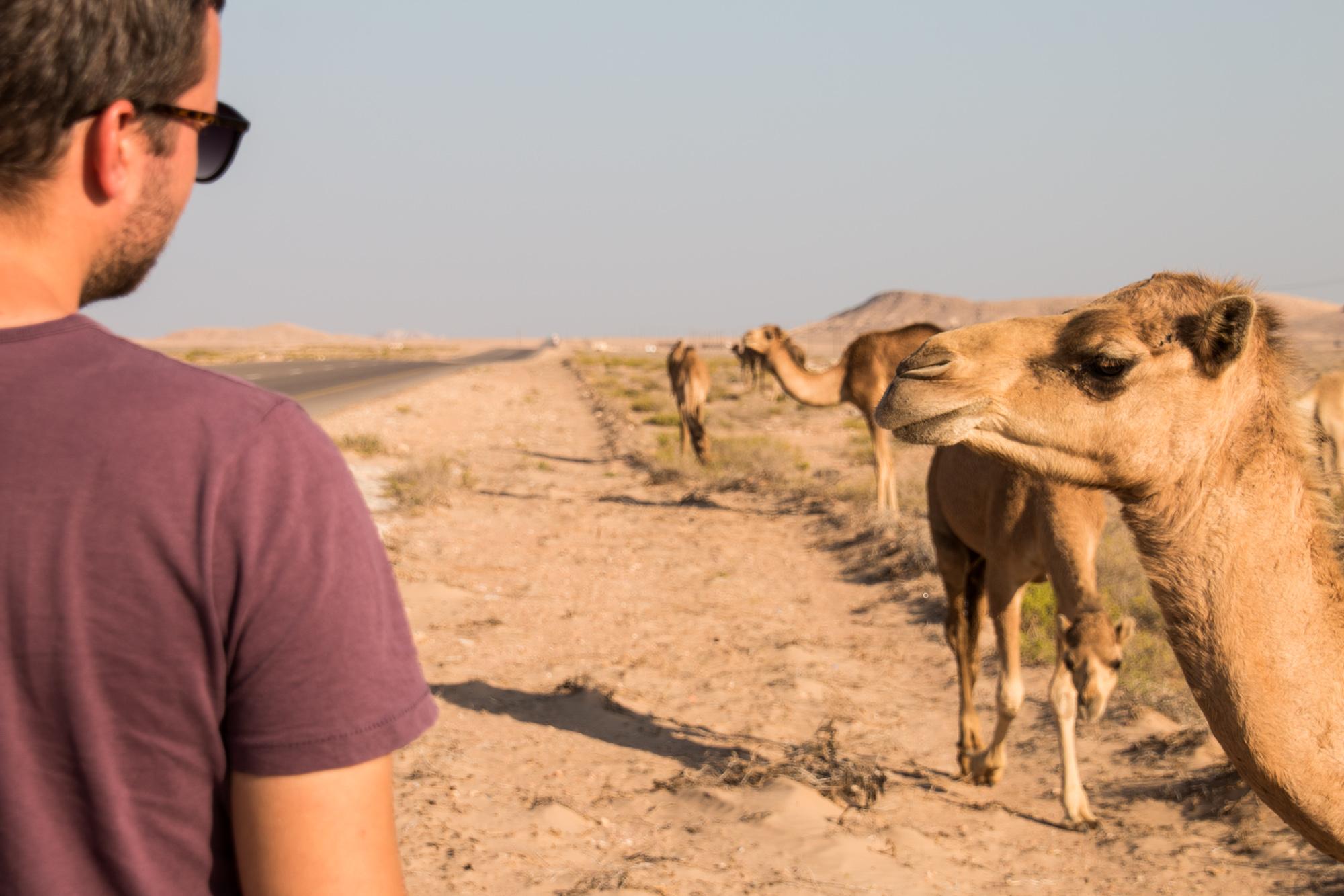Roadtrip, Oman