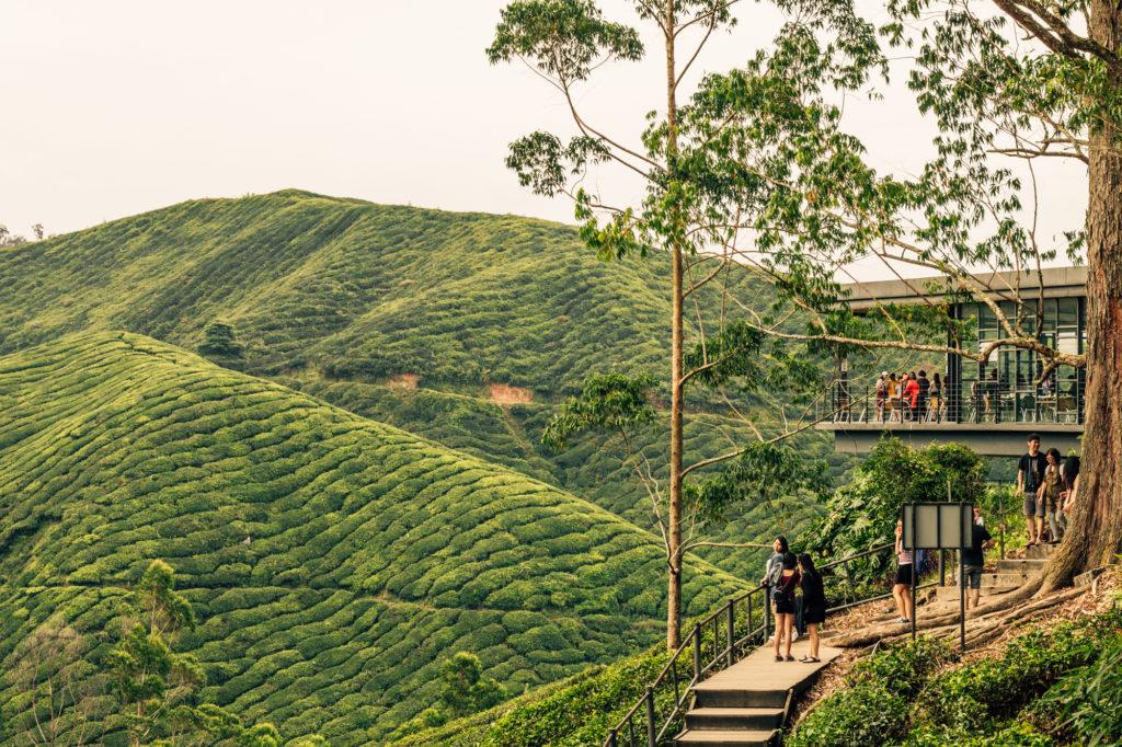 Boh Tea Estate, Cameron Highlands, Malaysia