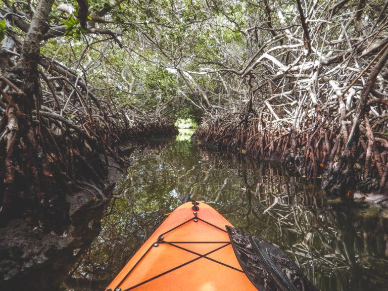 Mangrove Forest, Bonaire