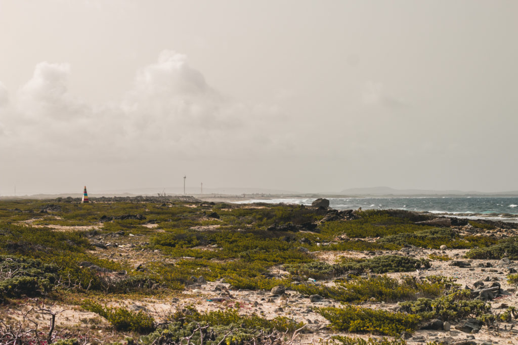 The wild south, Bonaire