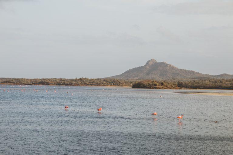 Goto Lake, Bonaire